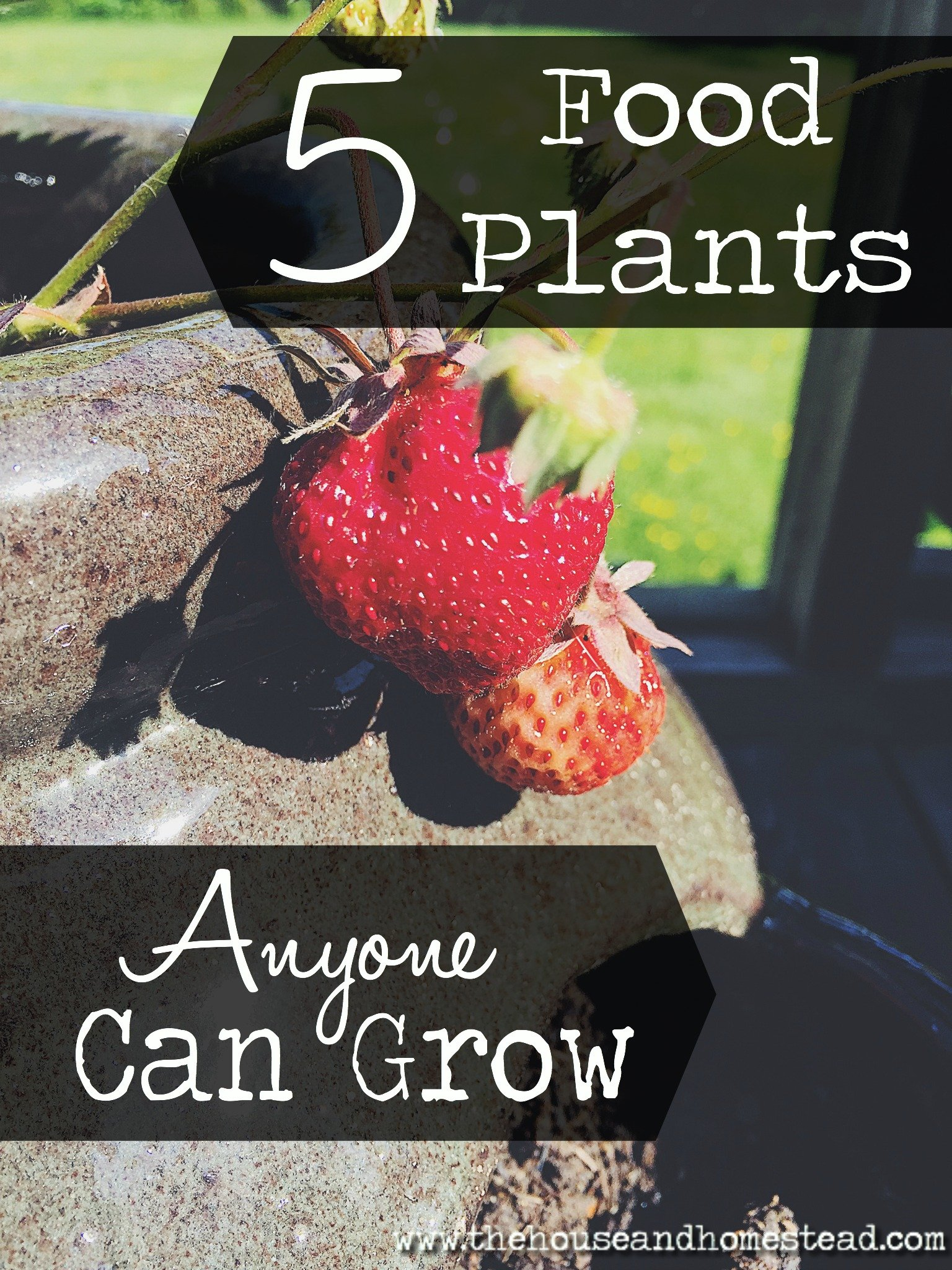 5 Food Plants Anyone Can Grow | Whether you're short on space or new to gardening, start with these no-fuss fruits and veggies to get you growing (and eating) from your own deck, balcony or backyard.