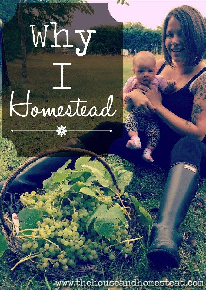 Why I Homestead