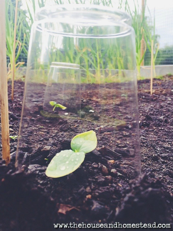 3 Ways to Protect Your Plants from the Cold   Shelter and protect your plants from the cold with these 3 ideas for keeping plants and seedlings warm
