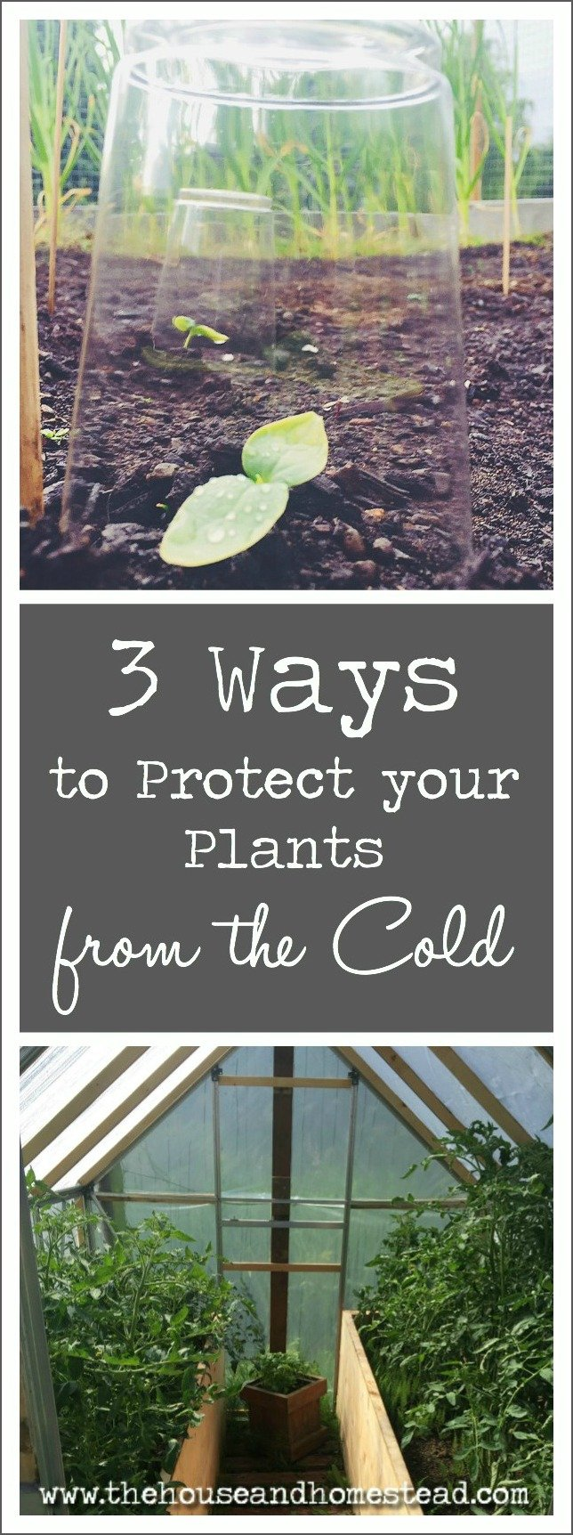 3 Ways to Protect Your Plants from the Cold | Shelter and protect your plants from the cold with these 3 ideas for keeping plants and seedlings warm