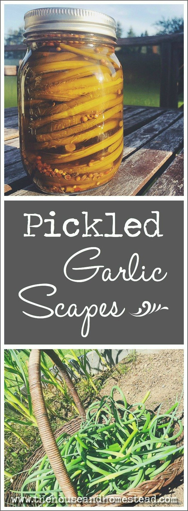 The best way to preserve garlic scapes for year-round enjoyment is to pickle them! This pickling brine is made with apple cider vinegar for a more mellow vinegar flavour that allows the garlic scapes to shine.