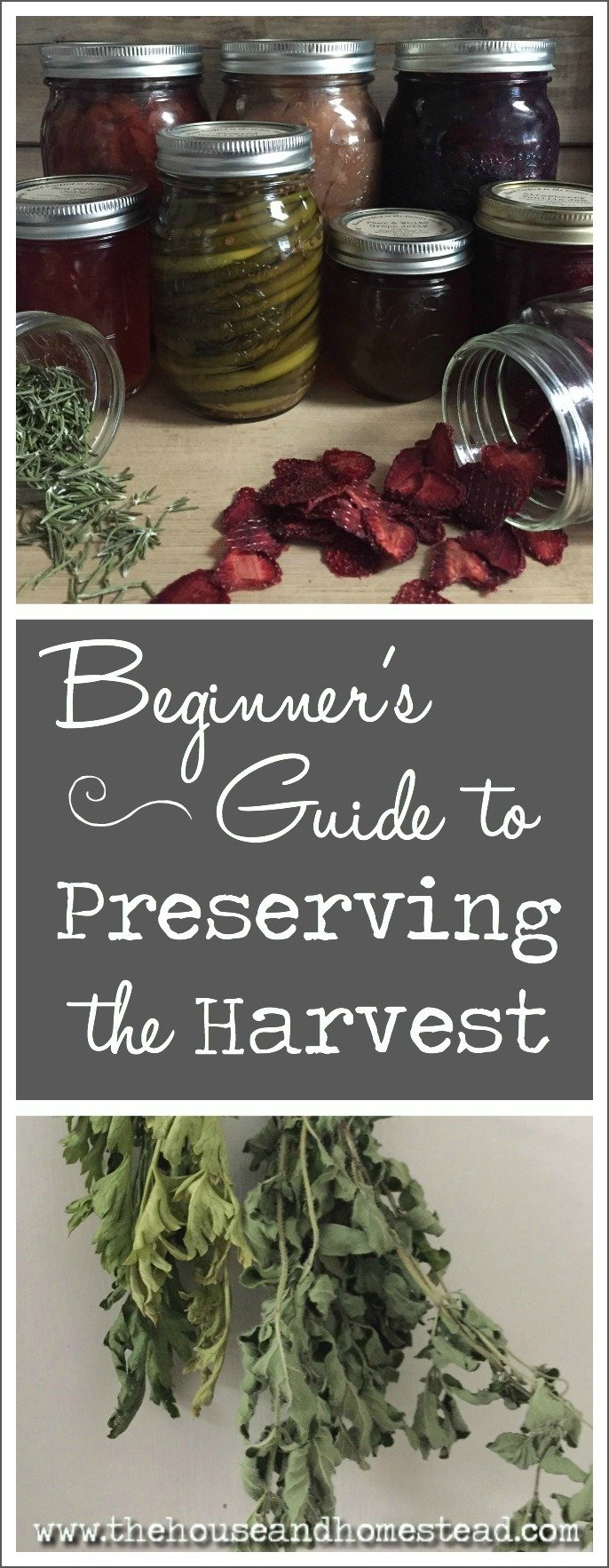 Preserving food is one of the most important skills you can acquire for homesteading, survival and self-reliance. Learn 3 easy ways to preserve the harvest with this beginner's guide to food preservation.