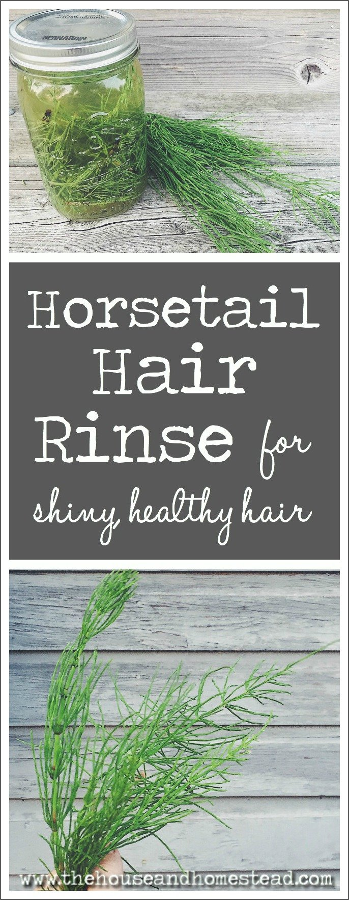 Horsetail is an invasive weed in the garden, but it can be put to good use! Packed with silica, horsetail can help you achieve strong, shiny, healthy hair. Make this super simple horsetail hair rinse with all-natural ingredients to start reaping the benefits of horsetail today!