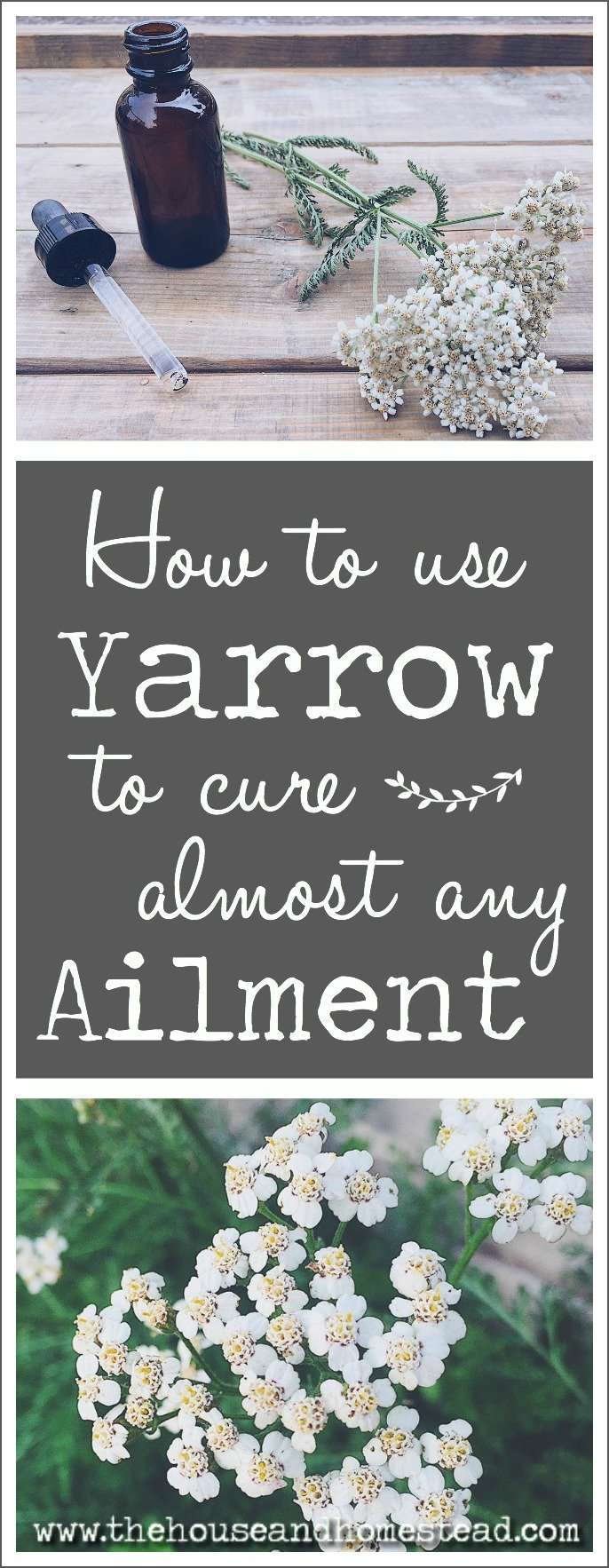 Yarrow is a powerful medicinal plant that can be used to treat almost any general illness or ailment. It makes an excellent addition to your home apothecary and is truly one of the most effective medicinal herbs for use in all sorts of home remedies.