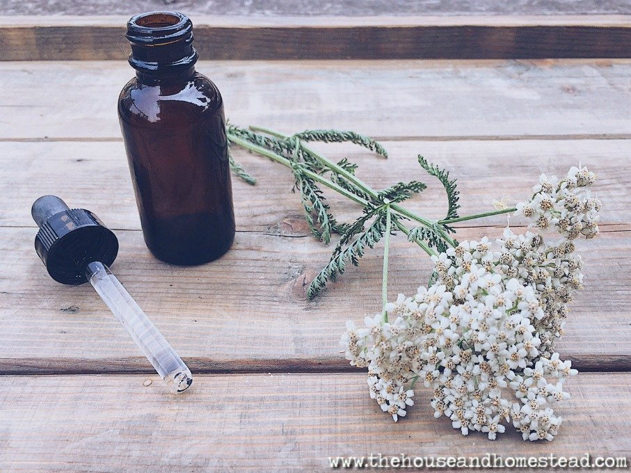 How to Use Yarrow to Cure Almost Any Ailment