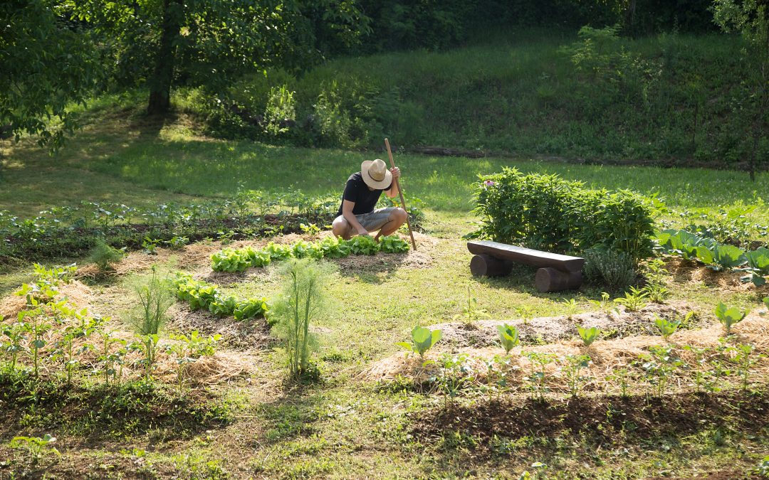 The Principles of Permaculture (And How to Make Them Work For You!)