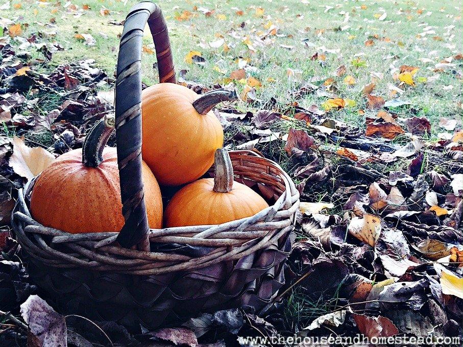 25 Real Pumpkin Recipes to Make At Home This Fall