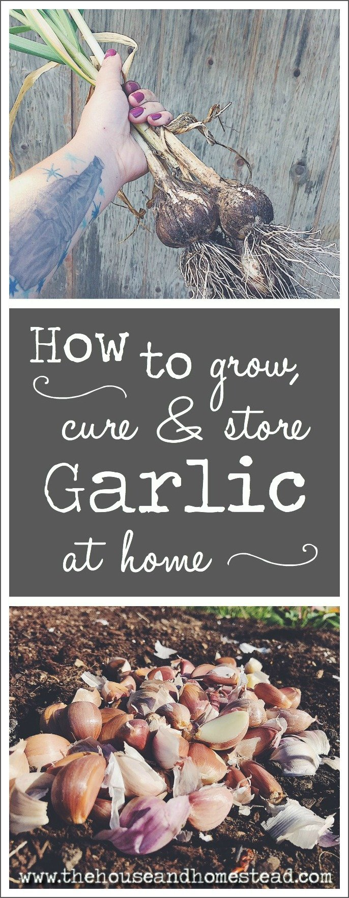 Garlic is one of the easiest crops to grow at home, and growing it yourself means you can be sure you're reaping the full health benefits of garlic while ensuring your garlic is safe and natural. Learn how to grow, cure and store garlic at home for good eating all year long!