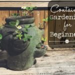 A complete guide to getting started with container gardening! From what containers to use to what to plant in them and how much space, time and commitment you'll need to your container garden. Everything you need to know about growing food in containers is right here.