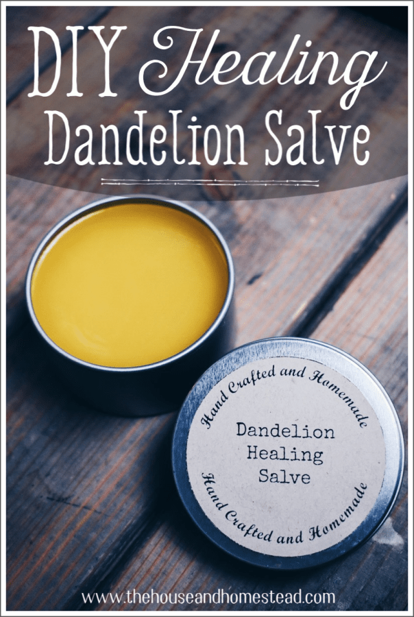 This DIY dandelion salve uses three simple ingredients including dandelion-infused oil made with dandelions picked right from your own home garden! It works wonders as a muscle rub, an herbal healing salve for cuts and scrapes and as a general moisturizer. And it makes use of the humble dandelion: loaded with medicinal properties but forgotten far too often! #dandelionsalve #dandelionoil