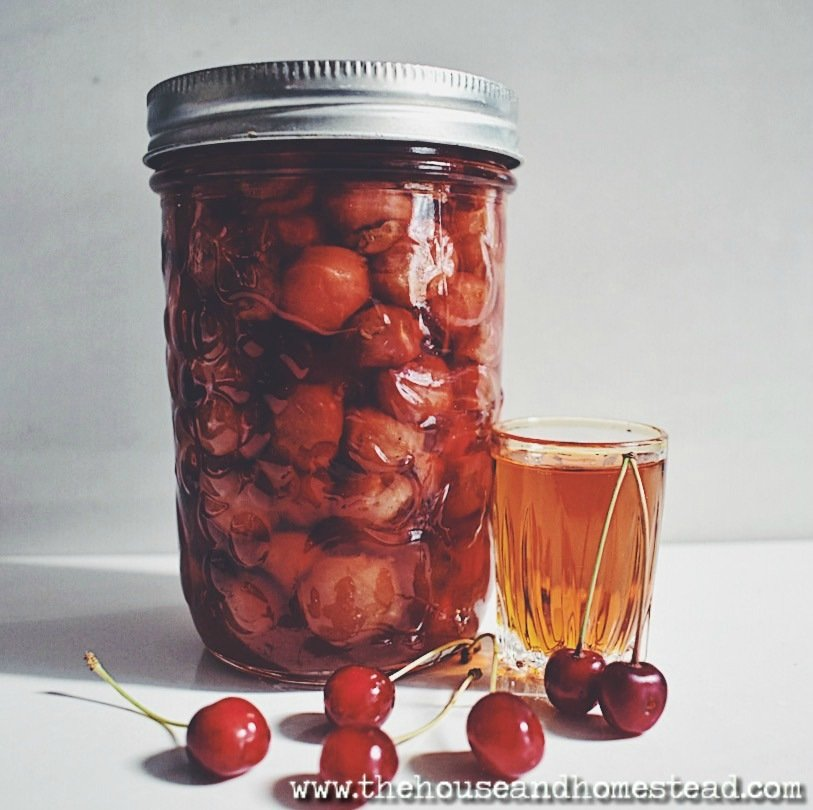 These amaretto cherry preserves are a delicious way to preserve fresh cherries for year-round eating. Here is a super simple recipe with equally simple canning instructions to make your own homemade amaretto cherries this summer. #amarettocherries #cherrypreserves #cherryrecipes #cherries #amarettocherrypreserves #canningcherries