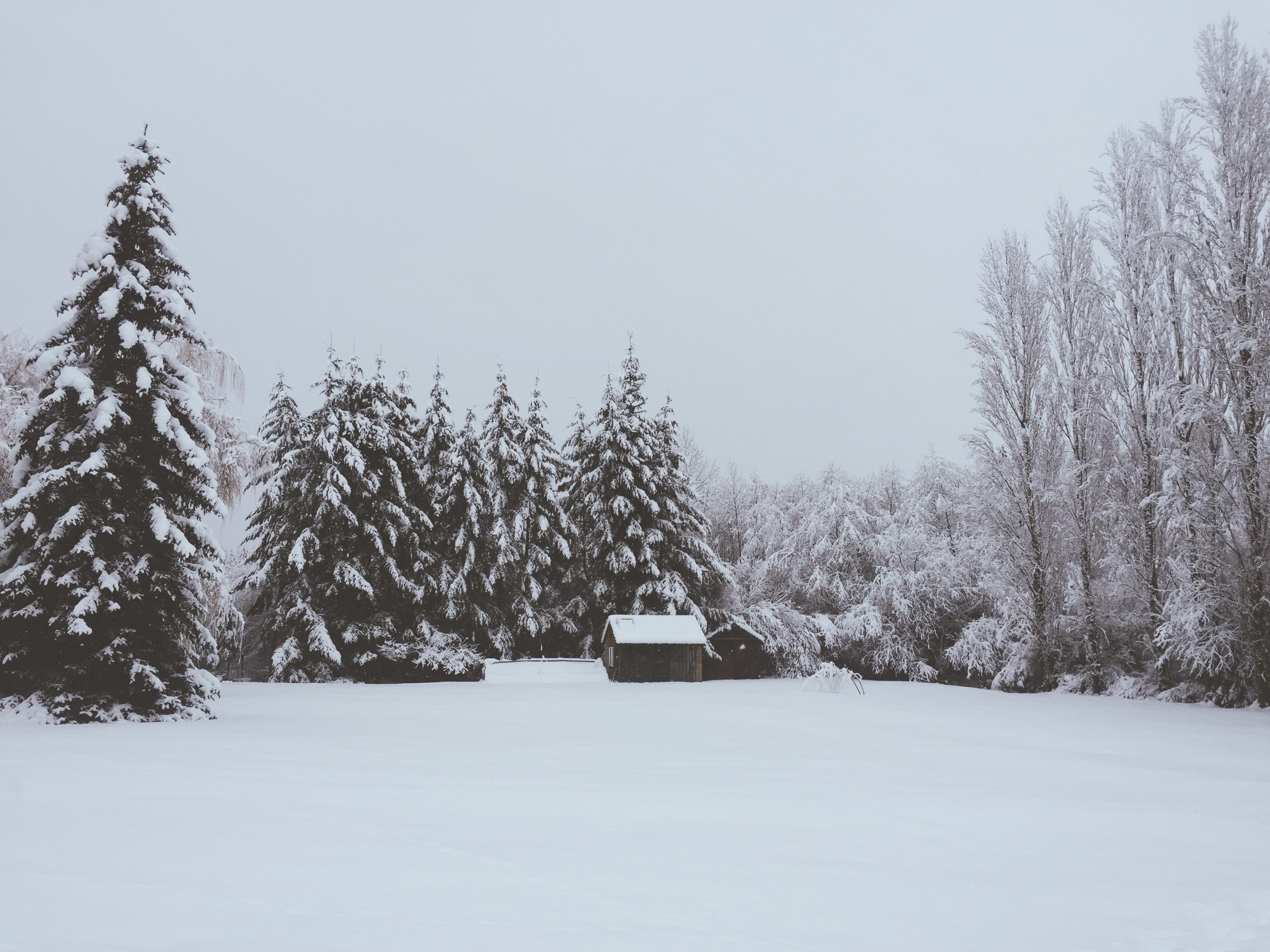 Every year has four seasons. So too does every full lifetime. Here I share with you some thoughts on the four seasons of life from birth to death, the significance of each one, and why we should always be grateful for whatever season we're in at the moment.