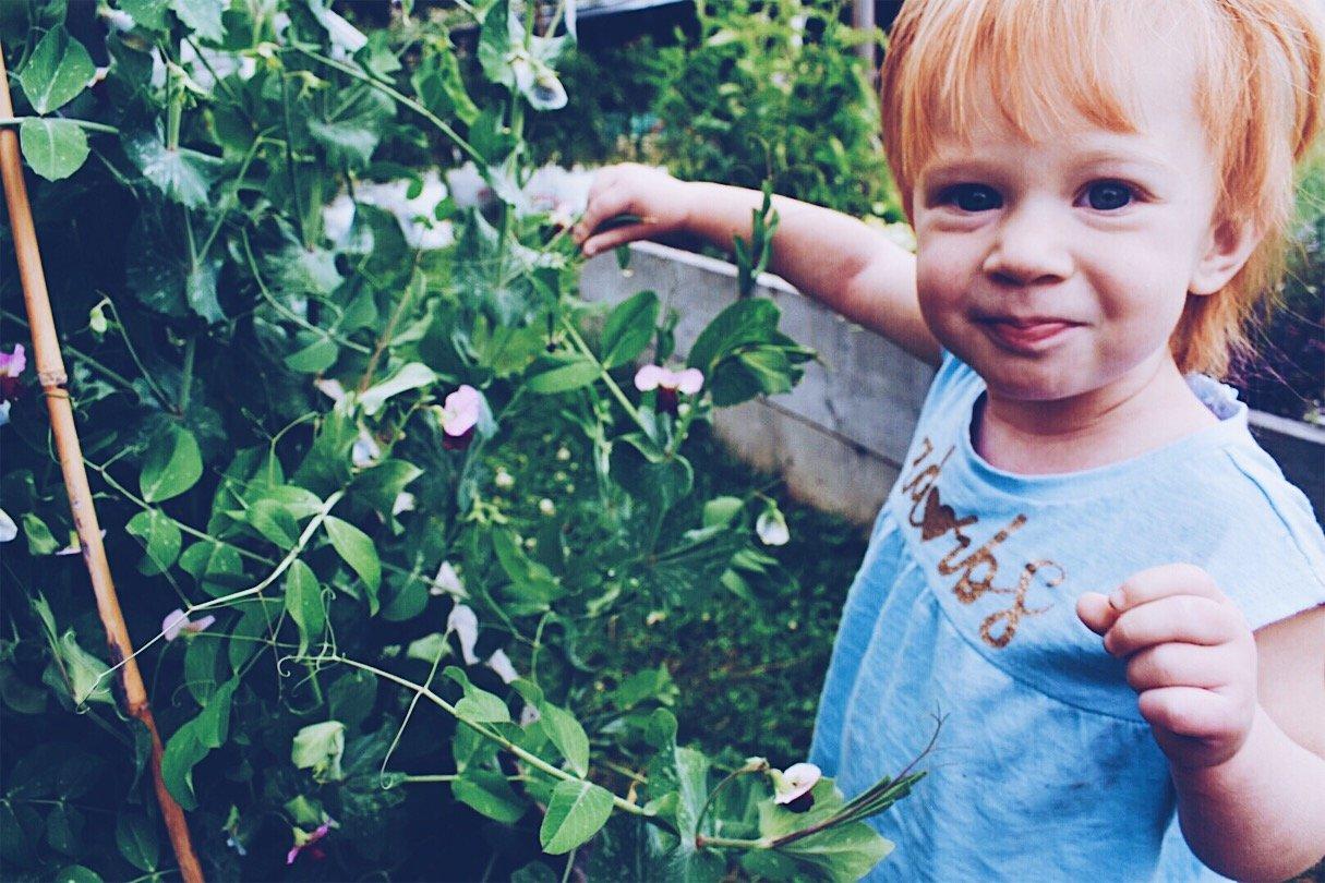 Picking peas