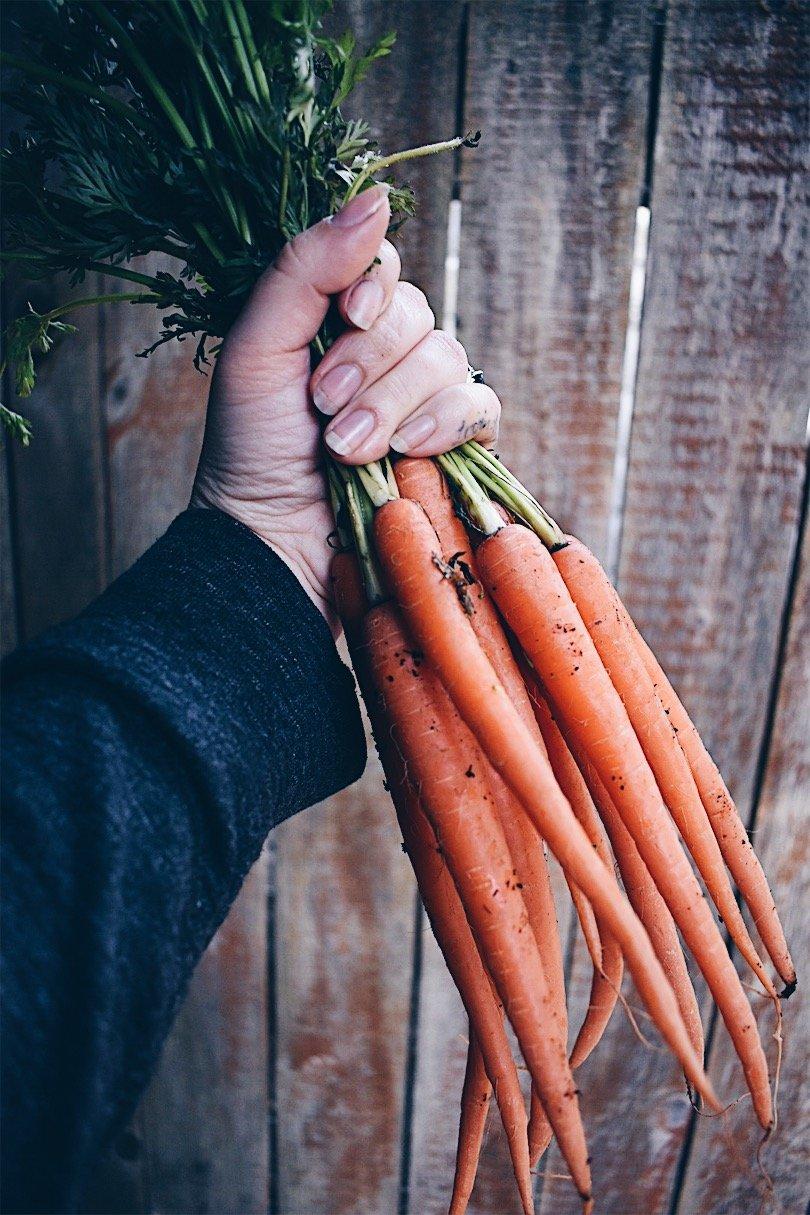 A handful of carrots