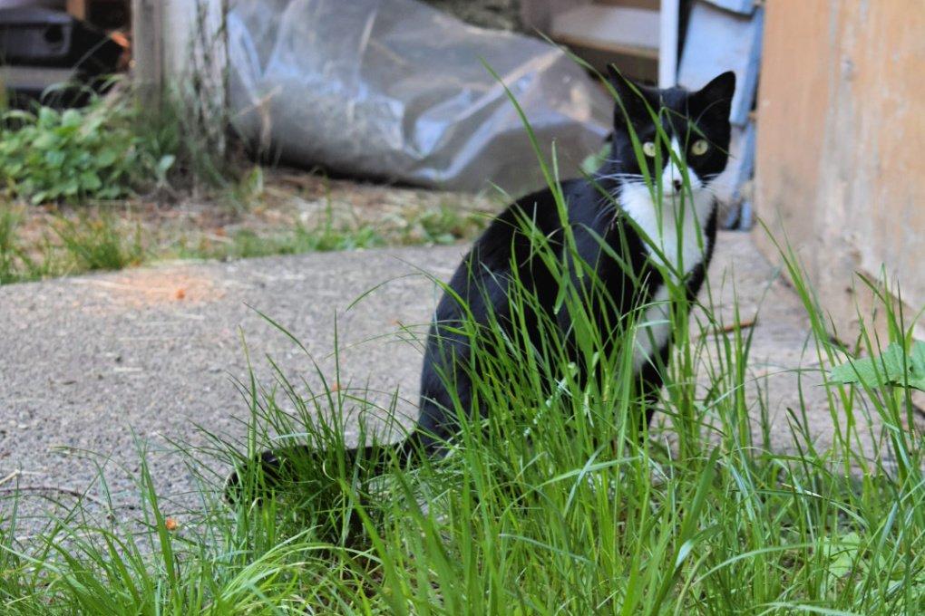 Cat peeking through the tall grass
