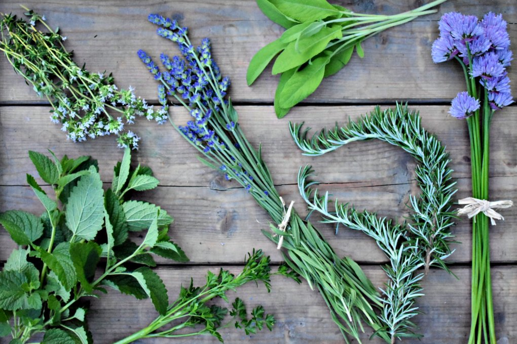 13 Culinary and Medicinal Herbs For Your Garden