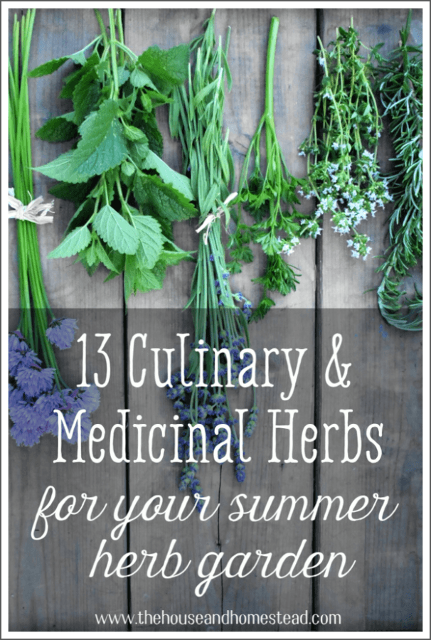 "Herbs have a long history of being used for both culinary and medicinal purposes. They truly are the reason for the famous quote, ""let thy food be thy medicine, and thy medicine be thy food."" Here are 13 must-have culinary and medicinal herbs for your home herb garden. #herbalremedies #medicinalherbs #culinaryherbs #herbgarden"
