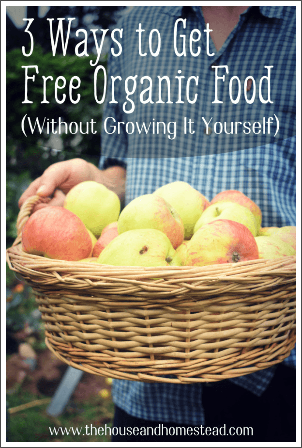 It's no secret that organic food is expensive, and not everyone has the space to grow a garden at home. But did you know there are ways to get organic food that's not just cheap, but free? Read on to learn how to get free organic food (without having to beg, steal or grow it yourself!) #getfreeorganicfood #savemoneyongroceries #savemoneyonorganicgroceries