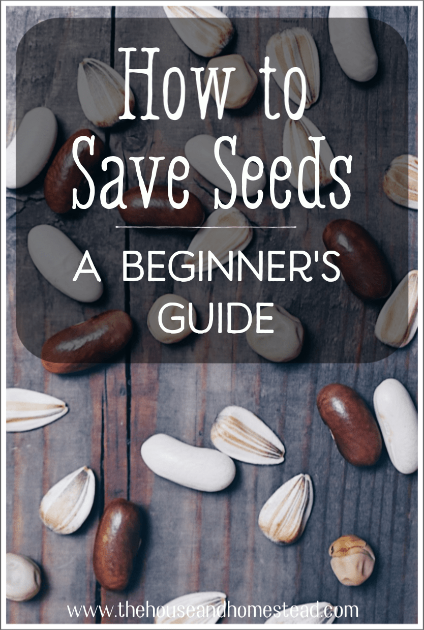 Learning how to save seeds will help you increase your self-sufficiency and grow healthy, productive plants year after year. Learn more about seed saving with this comprehensive guide!