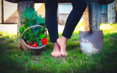 Can Homesteading Save the Planet?