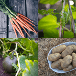 Top 10 Best Crops for Your Victory Garden