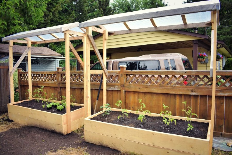 Tomato shelters | Tomato roofs | 6 Hacks for Growing A Bumper Crop of Tomatoes