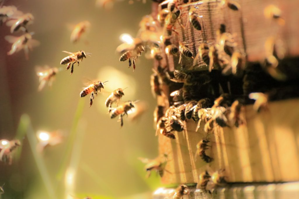 Honeybeesalone are responsible for pollinating 80% of fruits and vegetables globally. Learn what you can do at home to help save the bees and, and the many reasons why it matters!