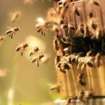 Bees Swarming A Hive | Honeybees alone are responsible for pollinating 80% of fruits and vegetables globally. Learn what you can do at home to help save the bees and, and the many reasons why it matters!