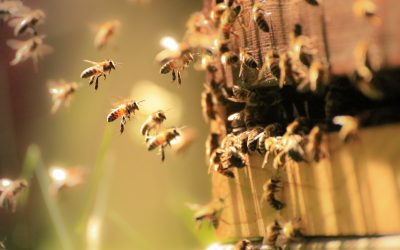3 Easy Ways to Help Save the Bees (And Why it Matters)