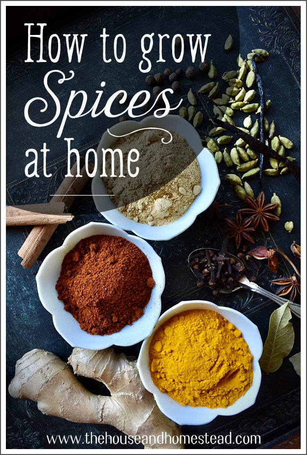 Lots of people have herb gardens, but not everyone has a spice garden! Learn how to grow your own spices at home with this step-by-step guide.