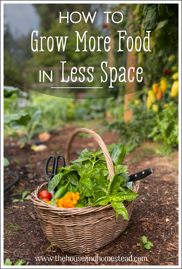 Expanding your garden without expanding your space can be tricky. Learn how to grow more food in less space and make the most of the space you've got! #smallgardenideas #smallspacegardening