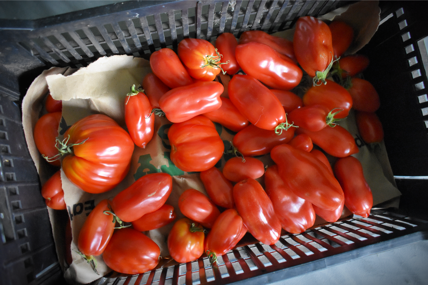 Learn how to can homemade tomato sauce with a water bath canner or a pressure canner and always have the makings of a delicious meal on hand! #howtocantomatosauce #homemadetomatosauce #tomatocanningrecipes